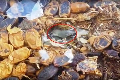 فيديوخطير:حجز وإتلاف 6789 كلغ من منتجات فاسدة، كانت معدة للاستهلاك بها أعشاش الفئران