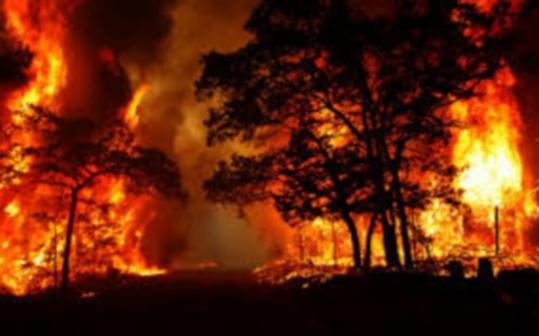 غابة كوروكو  تحترق والرياح تزيد من اتساع رقعة ألسنة النيران