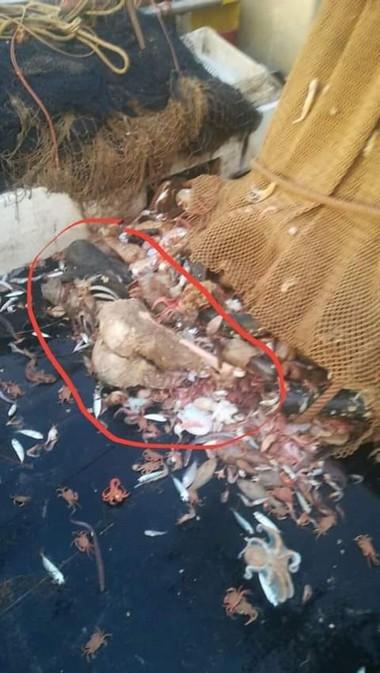 صيادو ميناء بني انصار يعثرون علئ جثة جديدة