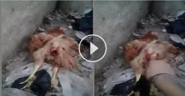 فضيحة مدوية وحش بشري يغتصب دجاجة حتى الموت/ فيديو