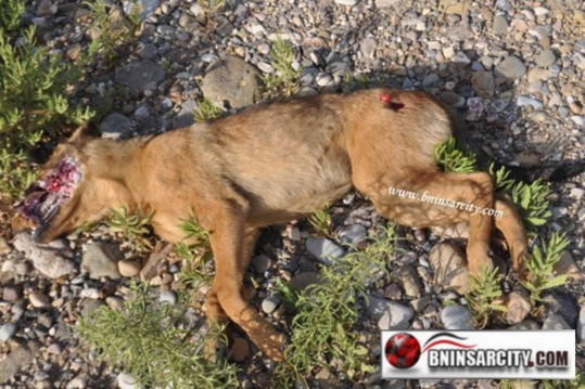 قتل الكلاب بطريقة همجية تستنكرها  رئيسة جمعية أمم بالناظور