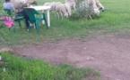 حديقة بني انصار: مرتعا خصبا للحيوانات