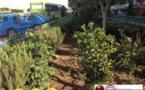 حديقة نموذجية بجانب محطة الأجرة الصغيرة ببني انصار/ فيديو