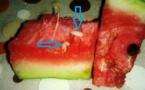 حذاري من استهلاك البطيخ الأحمر ( الدلاح) حيث يوجد بداخله دود أبيض