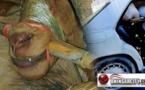 تهريب الحيوانات من مليلية المحتلة إلى المغرب بطريقة مختلفة عن معبر فرخانة
