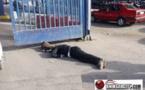 تعنيف وتحقير المواطن المغربي  بالمعبر الحدودي بني انصار/مليلية المحتلة من طرف الشرطة الإسبانية