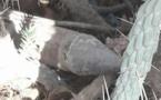 """استنفار أمني بسبب قنبلة """"حية""""بجرسيف"""