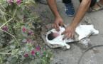 جثة رضيع حديث الولادة يتم العثور عليها بقارعة الطريق