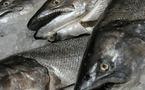 إسبانيا تحذر من استهلاك الأسماك الكبيرة بالناظور و شمال المغرب بسبب الديدان