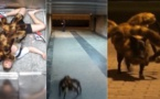 """مقلب """"الكلب العنكبوت"""" يحقق ازيد من 128' مليون مشاهدة على """"اليوتوب"""