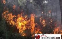حريق مهول يندلع  في الطريق الرابطة بين الناظور و بني انصار بغابة ماروست