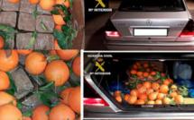 المعبر الحدودي فرخانة ببني انصار ومليلية المحتلة: احباط محاولة لادخال حشيش مخبأة في البرتقال